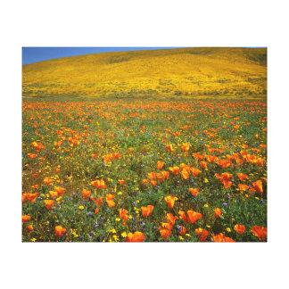USA, California, Antelope Valley California Canvas Print