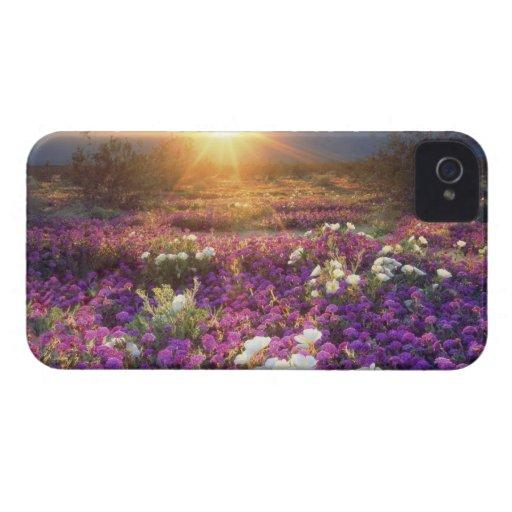 USA, California, Anza-Borrego Desert State Park. 2 Blackberry Bold Cases