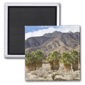 USA, California, Anza-Borrego Desert State Park. 2 Inch Square Magnet