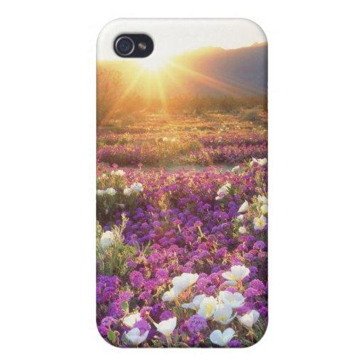 USA, California, Anza-Borrego Desert State Park. 2 iPhone 4/4S Case
