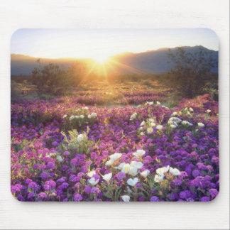 USA, California, Anza-Borrego Desert State Park. 2 Mouse Pad