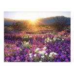 USA, California, Anza-Borrego Desert State Park. 2 Postcard