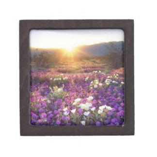 USA, California, Anza-Borrego Desert State Park. 2 Premium Keepsake Box