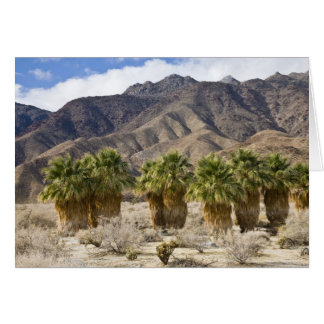 USA, California, Anza-Borrego Desert State Park. Card