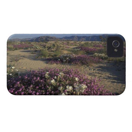 USA, California, Anza Borrego Desert State Park, Blackberry Cases