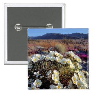 USA, California, Anza-Borrego DSP. Dune evening 2 Pinback Button