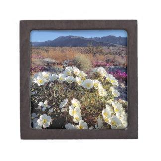 USA, California, Anza-Borrego DSP. Dune evening 2 Jewelry Box