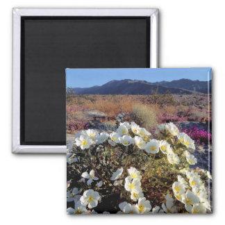 USA, California, Anza-Borrego DSP. Dune evening 2 Magnet