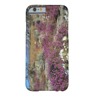USA, California, Anza-Borrego DSP. Dune evening Barely There iPhone 6 Case