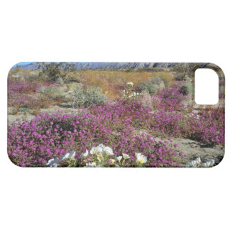 USA, California, Anza-Borrego DSP. Dune evening iPhone SE/5/5s Case