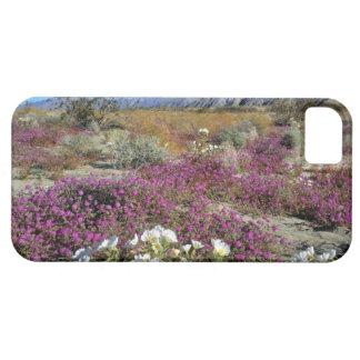 USA, California, Anza-Borrego DSP. Dune evening iPhone SE/5/5s Case