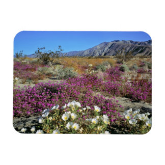 USA, California, Anza-Borrego DSP. Dune evening Magnet