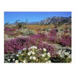 USA, California, Anza-Borrego DSP. Dune evening Postcard