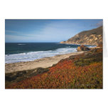 USA, California, Big Sur, Red plants by beach Greeting Cards