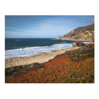 USA, California, Big Sur, Red plants by beach Postcard