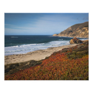 USA, California, Big Sur, Red plants by beach Poster