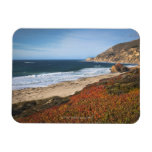 USA, California, Big Sur, Red plants by beach Magnet