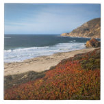 USA, California, Big Sur, Red plants by beach Large Square Tile