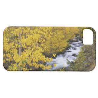 USA, California. Bishop Creek and aspen trees in iPhone 5 Cover