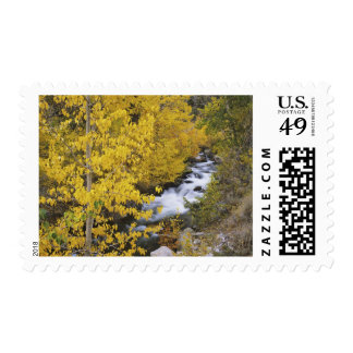 USA, California. Bishop Creek and aspen trees in Postage