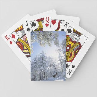 USA, California, Cleveland National Forest, Card Decks