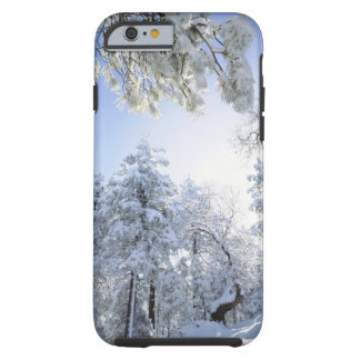 USA, California, Cleveland National Forest, Tough iPhone 6 Case
