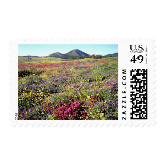 USA, California, Cuyamaca Rancho State Park. Postage Stamp