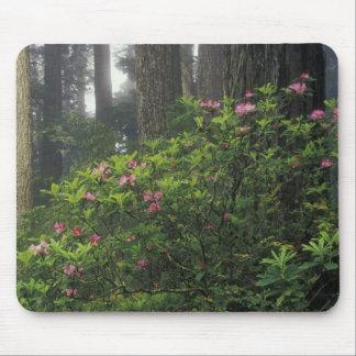 USA, California, Del Norte, Redwoods St. Park, Mouse Pad