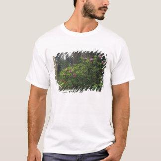 USA, California, Del Norte, Redwoods St. Park, T-Shirt