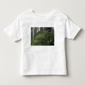 USA, California, Del Norte, Redwoods St. Park, Toddler T-shirt