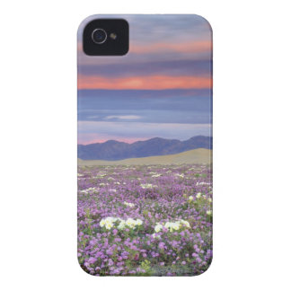 USA, California, Dumont Dunes. Sand verbena and iPhone 4 Case