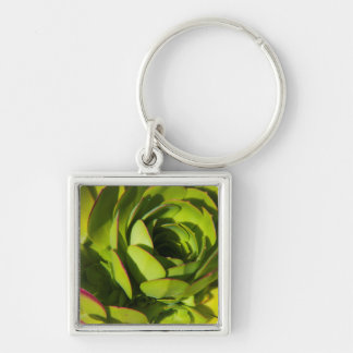 USA, California. Giant Lobelia Plant Close Up Keychain