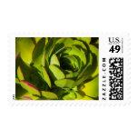 USA, California. Giant Lobelia Plant Close Up Postage Stamps