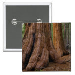 USA, California, Giant Sequoia tree Pinback Buttons