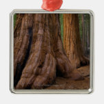 USA, California, Giant Sequoia tree Christmas Ornament