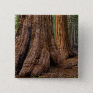 USA, California, Giant Sequoia tree Pinback Button