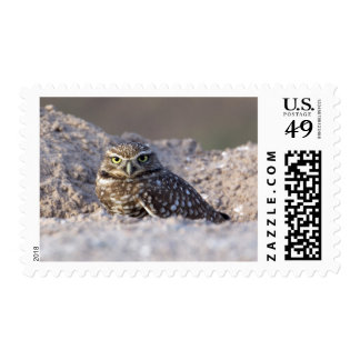USA - California - Imperial County - Salton Sea Postage