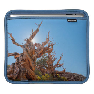 USA, California, Inyo National Forest 10 Sleeve For iPads