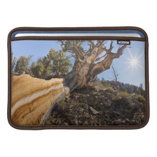 USA, California, Inyo National Forest 12 MacBook Sleeves