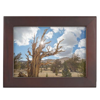 USA, California, Inyo National Forest 6 Memory Boxes