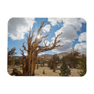 USA, California, Inyo National Forest 6 Rectangular Photo Magnet