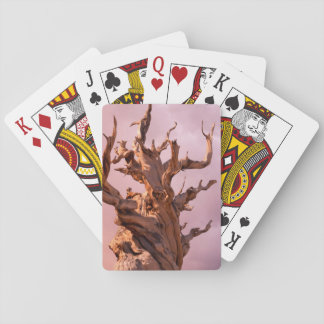 USA, California, Inyo National Forest 9 Deck Of Cards