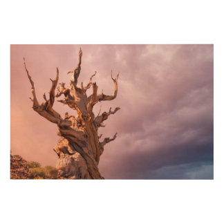 USA, California, Inyo National Forest 9 Wood Wall Art