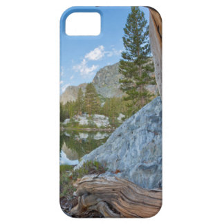 USA, California, Inyo National Forest. Old Pine iPhone SE/5/5s Case