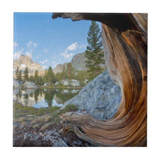 USA, California, Inyo National Forest. Old Pine Tile