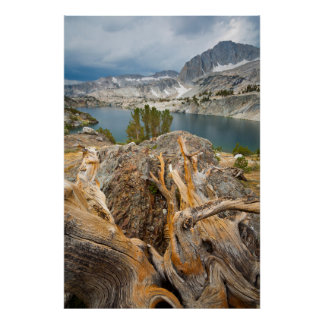 USA, California, Inyo National Forest. Poster
