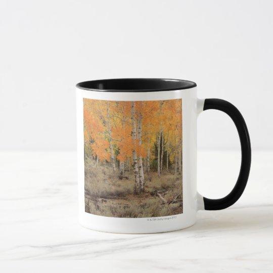 USA, California, Inyo National Park , Red aspens Mug