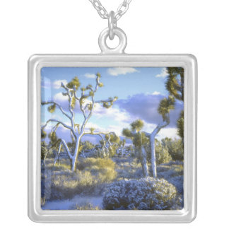 USA, California, Joshua Tree National Park. 2 Silver Plated Necklace