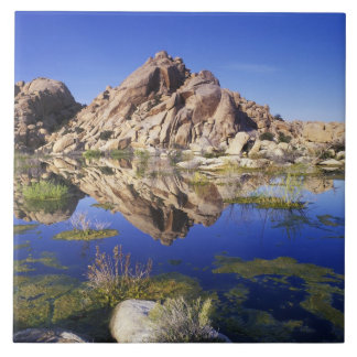 USA, California, Joshua Tree National Park, Ceramic Tile