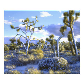 USA, California, Joshua Tree National Park. Photo Print